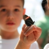 kids-playing-with-butterfly-camp-chrysalis